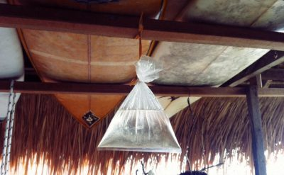 Hang bags of water with a few pennies in it and hang around food areas to keep flies away.