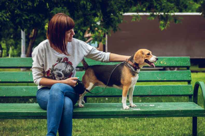photo of woman sitting on bench beside a beagle