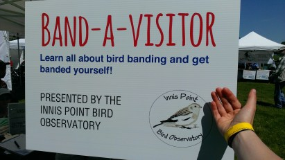 We were banded by the Innis Point Bird Observatory.