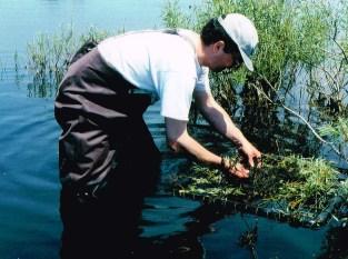Rob setting up a nesting platform for Black Terns