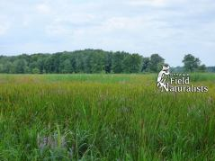 Marsh at the end of Champlain Road (A birding hot-spot), By - Maria Fleming