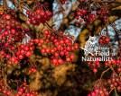 Winter Berries - By, Rick Sellick