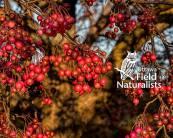 Winter Berries - By, Rick Sellick