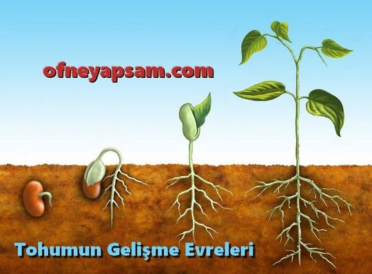Tohum ve Meyve Oluşumu