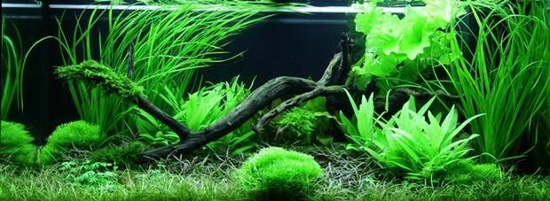 аквариумы фото дизайн 3