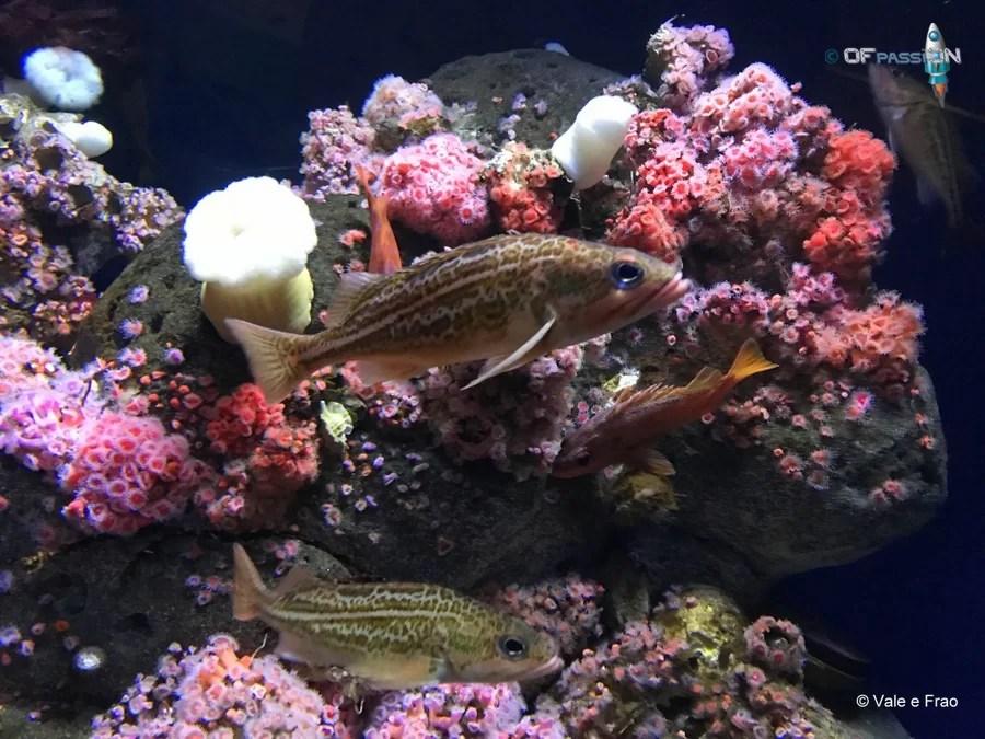 pesci acquario museo della scienza california valeria cagnina francesco baldassarre san francisco