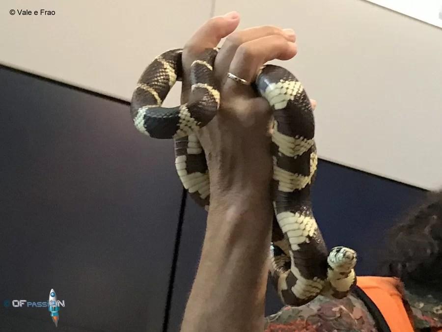 serpente da toccare valeria cagnina francesco baldassarre california accademia della scienza ofpassion