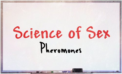 science of sex pheromones