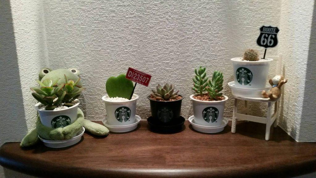 浴室 観葉植物 ポトス - HTFYL