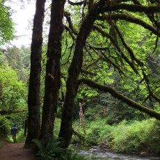 Silver Falls, South Falls, Oregon