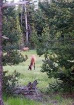 West Thumb Geyser Basin, Yellowstone