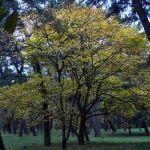 晩秋の森とロックンロール