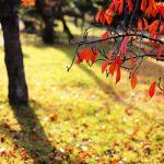 【EOS6D】晩秋の神社と公園を【EF50mmF1.4】