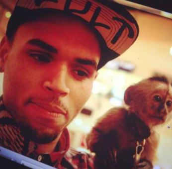 Singer-Chris-Brown-with-his-monkey