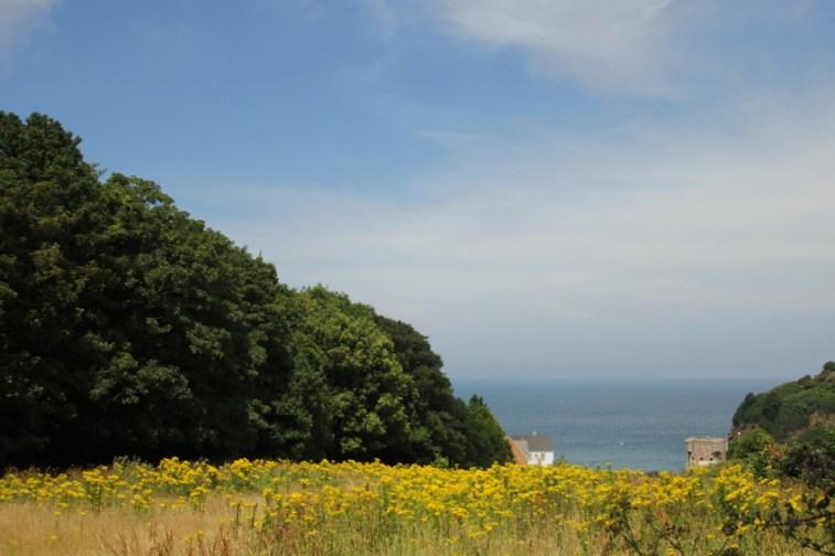 Jersey bloemenweide