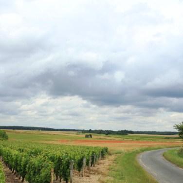 wijngaard, graan en klaprozen