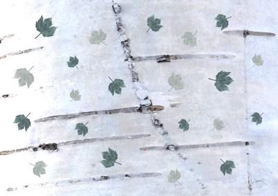 42. Green - birch