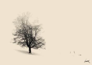 5. Sepia sketch - tree