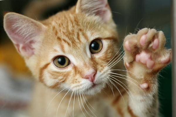 貓肉球的祕密