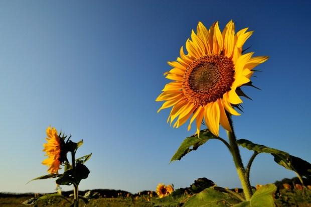 flower-1091528_1280