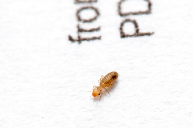 Casa che vai insetti e ragni che trovi oggiscienza