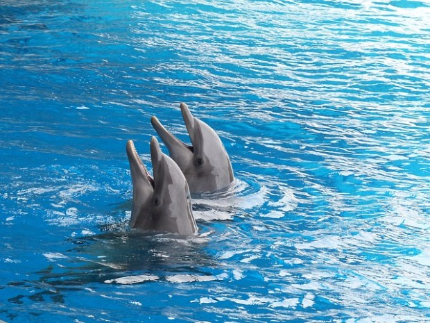 Nuotare coi delfini è educativo? Esperti a confronto sul decreto ...