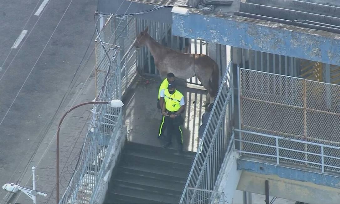 Égua subiu sozinha na entrada da estação de trem de Campo Campo, na Zona Oeste do Rio Foto: Reprodução/TV Globo