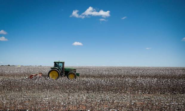 In the photo, cotton plantation in the city of São Desidério on the banks of the BR-020 Photo: Pablo Jacob / Agência O Globo