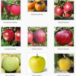 Sadnice voća za jesenju sadnju – REZERVACIJA