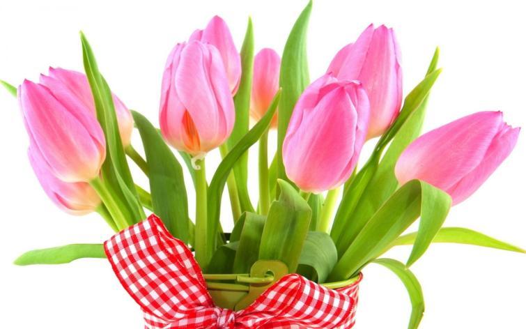 Картинки по запросу тюльпаны