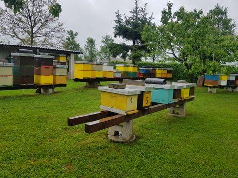 Ogulin.eu Svjetski dan pčela