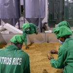 mitros ofada-rice