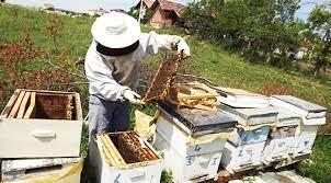 Arı Bakımı Hakkında