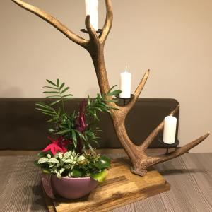 Kerzenhalter aus Geweih auf Akazie, Geschenke für Jäger, Kerzenständer aus Geweih, Kerzenhalter, Kerzenständer, Rothirsch, Geweih, Hirschgeweih Deko