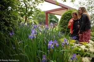 青いお花の写真を集めてFacebookのバトンに参加してみた