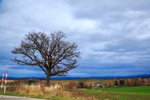初冬だけど美瑛の木を写真に撮った