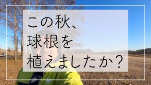 Read more about the article YouTube動画をアップしました「この秋、球根を植えましたか?」