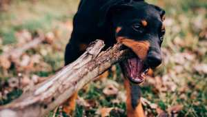 Read more about the article Avoiding Dog Bites: How to Act When Faced With an Aggressive Pooch
