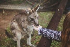 30 bilder från Australien