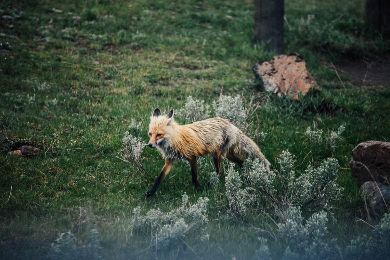 yellowstone-nationalpark-5