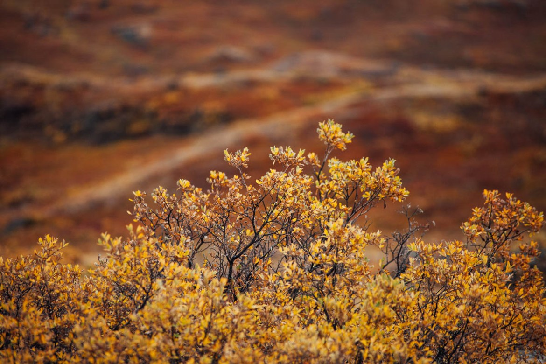 greenland (14)