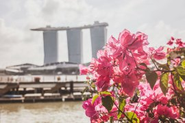 Reklam: Vinn resa till Singapore