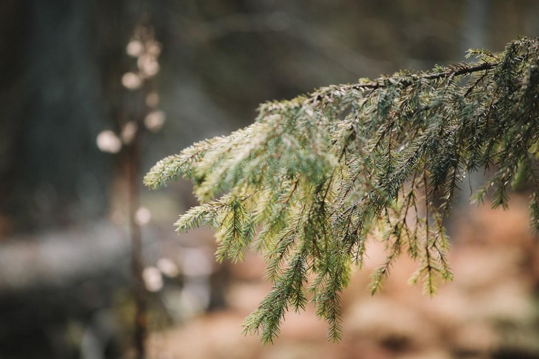 Fulufjällets nationalpark i Dalarna