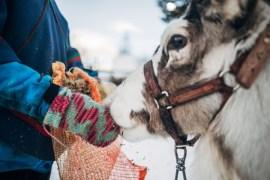 Vinter i Kiruna - tips på upplevelser och aktiviteter