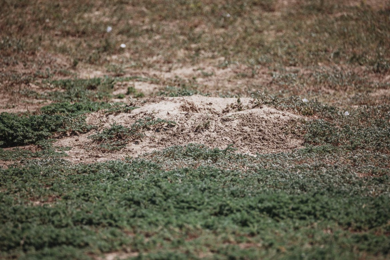 Präriehund i Theodore Roosevelt National Park