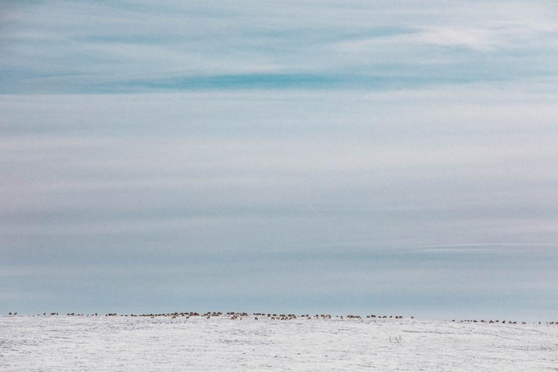 Vårvinter i Lappland