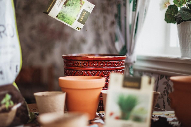 Plantera och odla med Impecta Fröhandel