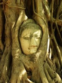 Wat Mahatat - Buddhabaum
