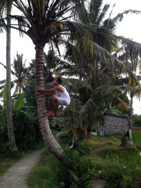 Samy's Versuch eine Kokosnuss zu pflücken