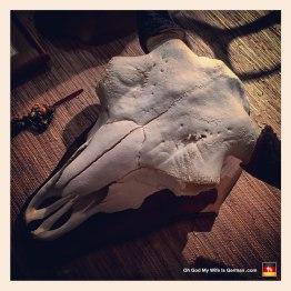 09-taxidermy-hunting-trophy-buffalo-skull